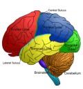 brain00.jpg